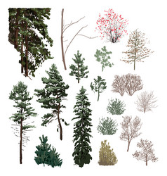 Collection coniferous trees different hights vector