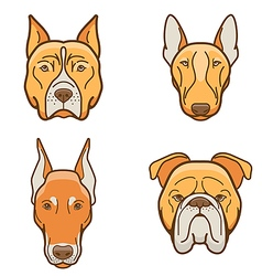 dog faces various breeds vector image