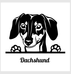 Dog head dachshund breed black and white vector