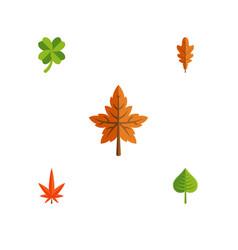 Flat icon leaves set alder aspen linden and vector