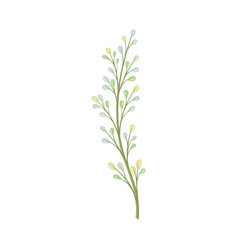 Long stalk with small leaves vector