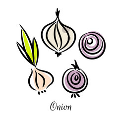 Onion doodle different types set vector