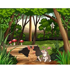 Scene with two rabbits in forest vector image