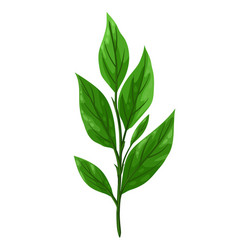 sprig with green leaves vector image