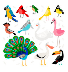 Tropical and exotic birds set vector