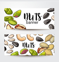 banners with nuts seeds and place for text vector image