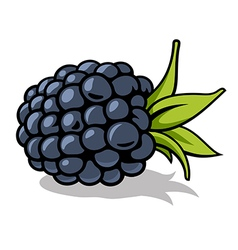 Blackberry 001 vector image