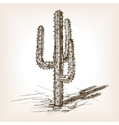 Cactus hand drawn sketch style vector