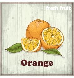 Fresh fruit sketch background Vintage hand vector
