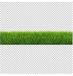 green grass background isolated transparent vector image