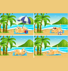 set of cat at the beach vector image