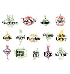 vegetable farm food sketch lettering vector image