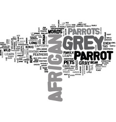 african grey parrot text word cloud concept vector image