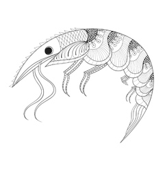 Hand drawn zentangle Shrimp for adult anti stress vector image