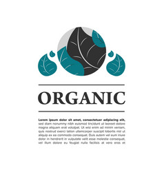 organic food banner vector image