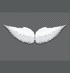 Realistic white angel wings on transparent vector