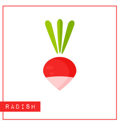 isolated red radish memory training card vector image