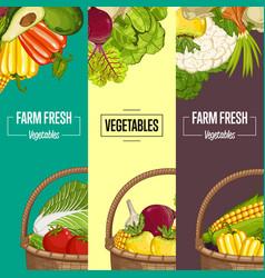 organic vegetable farming flyers set vector image vector image