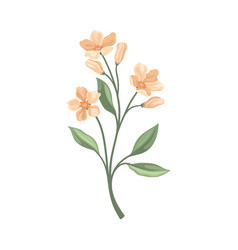 Branch with pale pink flowers vector