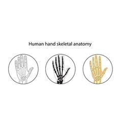 Set of human hand skeleton vector