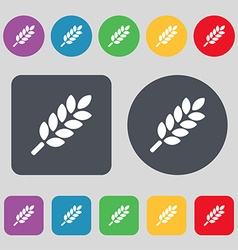 Wheat Ears Icon sign A set of 12 colored buttons vector image