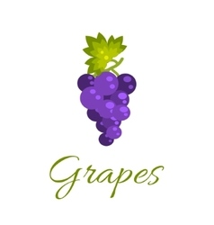 Grapes isolated icon Logo concept vector image