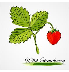 wild strawberry vector image