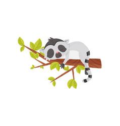 adorable lemur sleeping on tree branch exotic vector image