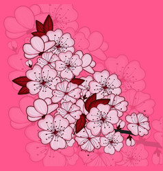 cherry blossom flowers vector image