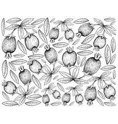 Hand drawn background of cherry of the rio grande vector