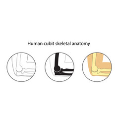 Set of human cubit skeleton vector