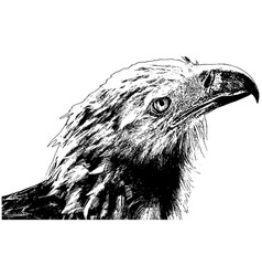 american bald eagle profile vector image