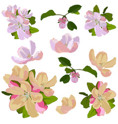 Apple tree blossom set isolated vector