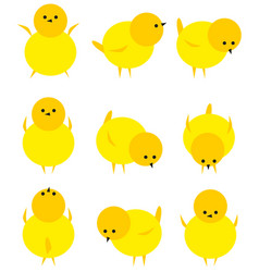 Baby yellow chicken isolated on white icon set vector