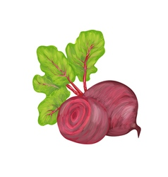 beetroot on white background vector image