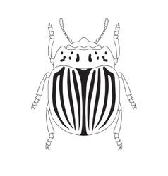 colorado potato beetle Leptinotarsa decemlineata vector image