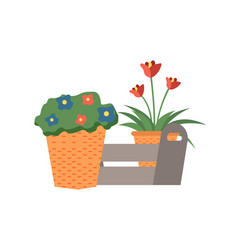 Flower growing in pot box with flora decor vector