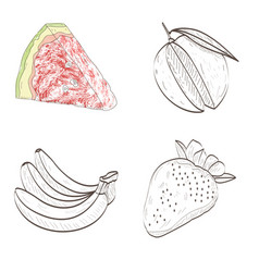 isolated fruits outlines vector image