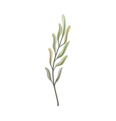 Long curved leaves on stem vector