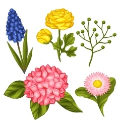 Set of garden flowers Decorative hortense vector