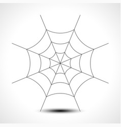 spider web isolated on white background vector image
