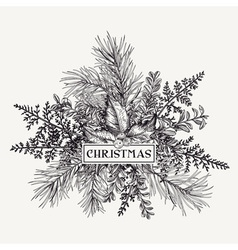 Greeting card with pine branches holly berries and vector image vector image