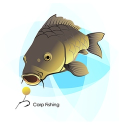 Carp Fishing vector image