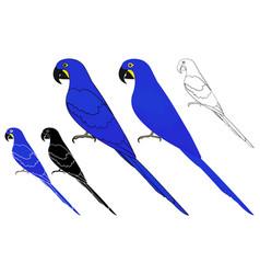 Arara azul bird in profile view vector