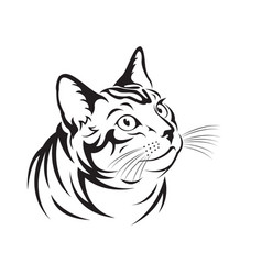 Cat on white background pet animal vector