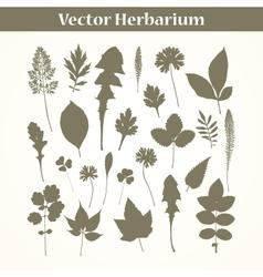 Herbarium vector