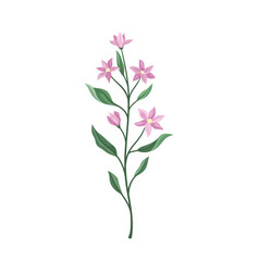 Lilac flowers on a green stem vector