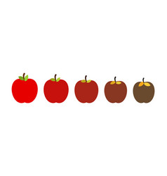 Stage rotting apple beautiful red fresh fruit vector