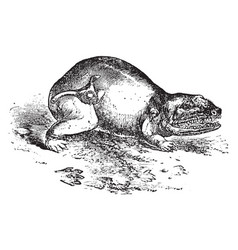 Labyrinthodon vintage vector