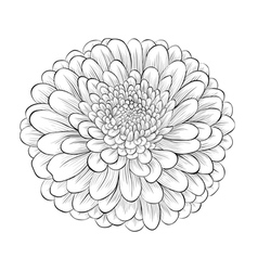 black and white flower isolated vector image
